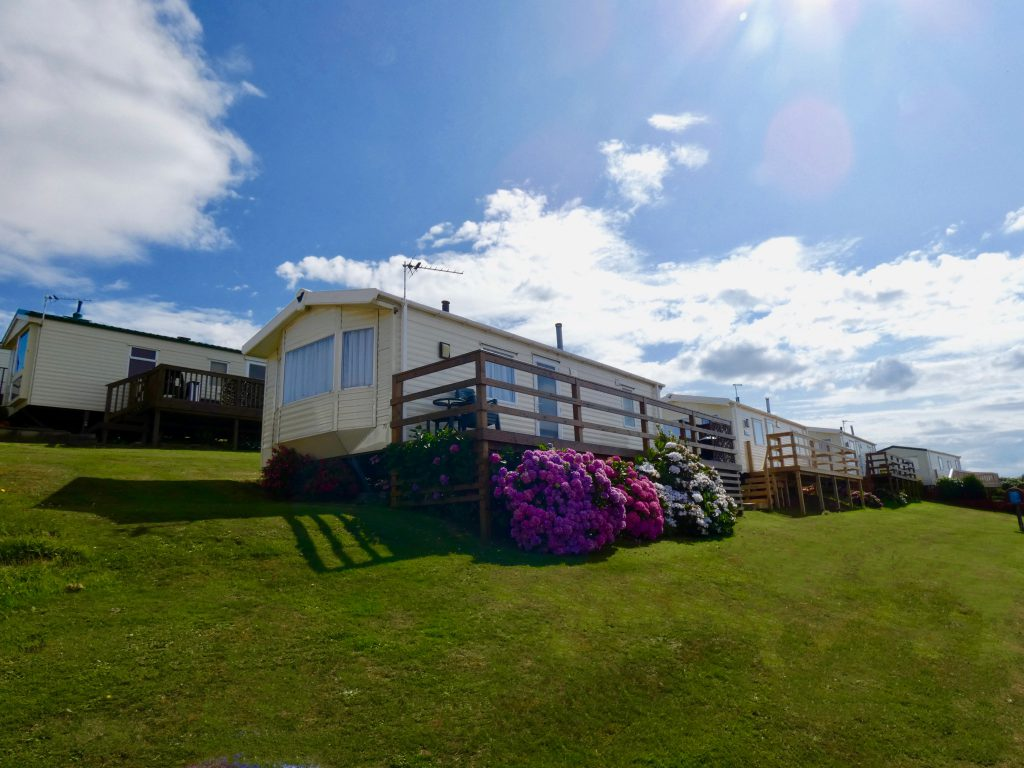 coast-caravan-park-clevedon-private-unspoilt-natural-hillside-hydrangea-